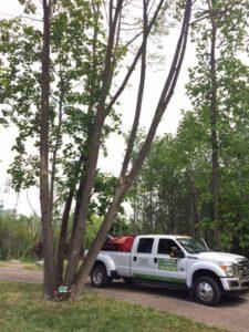Yard Maintenance, Tree Trimming