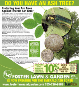 Ash Tree Information
